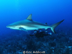 Wife and shark, Canon S95 by Eric Addicott 